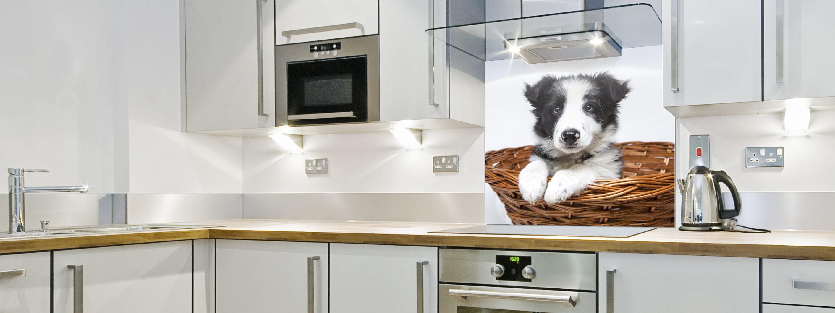 Collie Puppy - Printed Glass Splashback